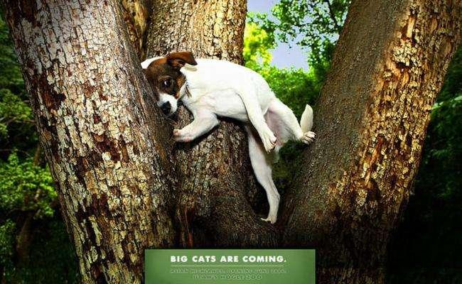 Креативная реклама зоопарков
