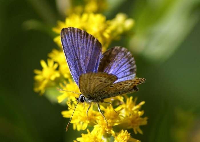 Мир бабочек через объектив