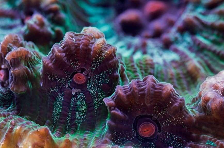 Колоритные кораллы
